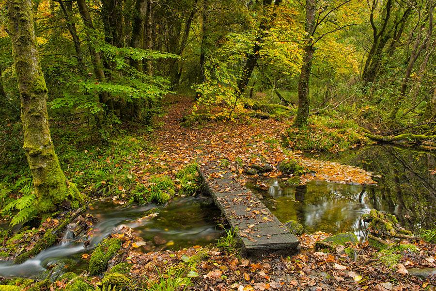 Blue Pool Nature Trail